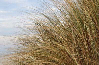 Das Betreten der Dünen ist zum Schutz der Flora und Fauna nicht gestattet