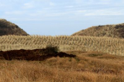 Genießen Sie die inselspezifische Natur und die Bewegung an der frischen Nordseeluft