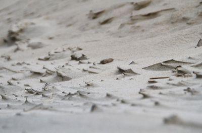 Dies ist keine Luftaufnahme der Gobi-Wüste, sondern eine Nahaufnahme unseres feinen Langeooger Sandstrandes